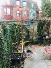 Solea exploring the fenced backyard