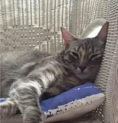 Monchi sleeping