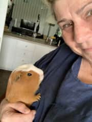 Peaches the Guinea Pig, Campbell, ACT