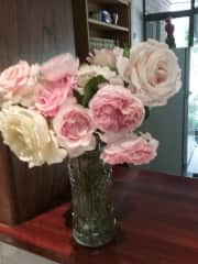 Roses that I planted in 2017 at Kangarilla