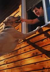 Groover (dog I pet sit for)