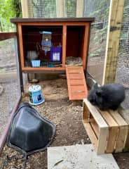 Thunder is current a free-range bunny, and lives behind the other bunnies.