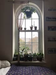 Our beloved plant window (these are only some of them!)