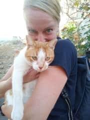 Affectionate cat on La Gomera