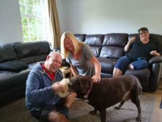 Lily the brown Labrador UK House sit