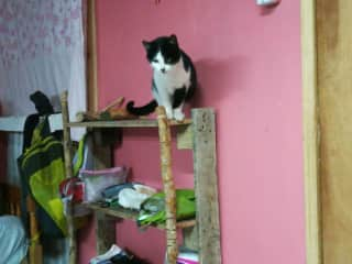Secretly adopted 2 friendly cats in our bedroom, for it was too cold outside at night (volunteer wrk, Chile)