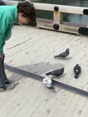 Oskar's hands-down favorite; pigeons!