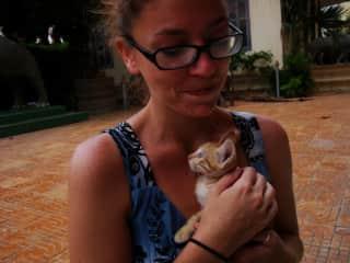 Kittens in Cambodia.