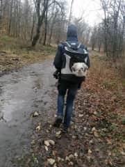 Darwin way of walking