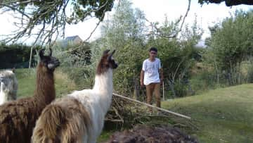 Louis with my father's lamas