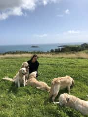 Anne with the Goldens in Ireland