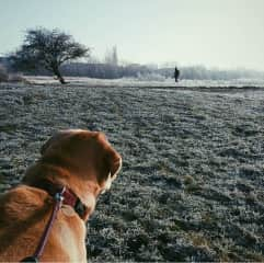 Out for a walk with Momo in cold Oxford weather