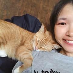 the lovely kitten
