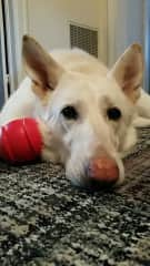 Bacchus and his favorite red ball.