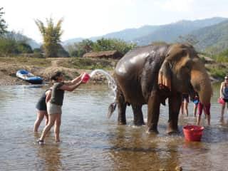 Sue bathing elephants in Thailand