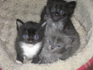 My first foster kittens