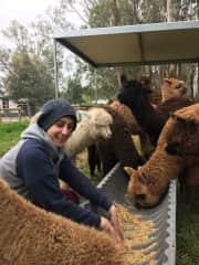 Helping out on a friend's Alpaca Farm