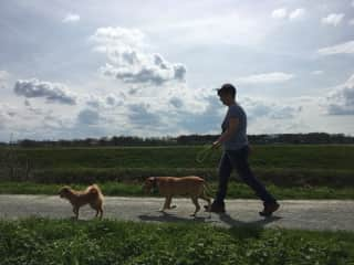 Natasja walking Django & Trixie, our first TrustedHouseSit pets, adorable dogs.
