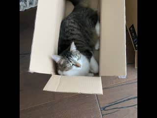 who doesn't love a box?