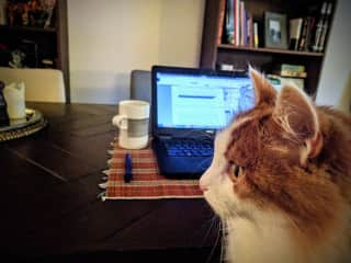 Working while cat-sitting in Amsterdam