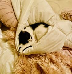 Lulu having a snooze