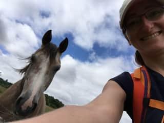 Walking 450 miles across France, making friends along the way (2017)