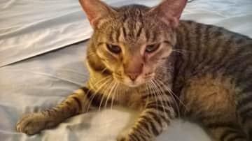 Buster, wild Roatan island kitty!
