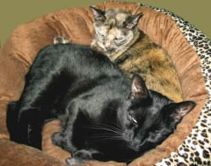 """""""Marvin"""" and """"Lilac"""" snuggle in the sun. Third rescue kitty, Val"""", another handsome black cat was camera shy."""