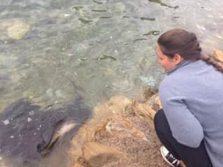 The lodge I worked at in New Zealand had frequent visits from stingrays.