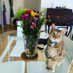 Mizna and flowers