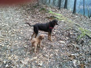 Roxy (top) and Rocco on a hike at the park.