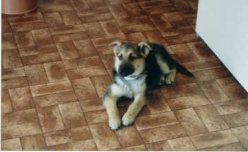 My rescue pup Duchess