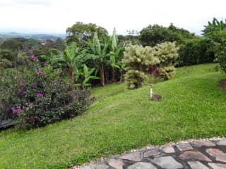 Our mini banana grove