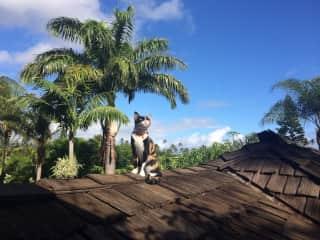 Edith on Maui