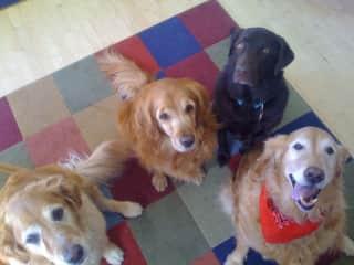 Abby, Eddie, Sam and Chloe waiting for a treat perhaps?