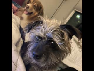 House sitting and pet sitting  Duke and Daisy for a month in Clayton, California. Feb 2021. Duke can play ball for hours and hours.