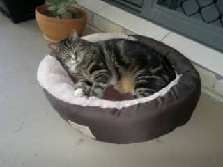 We have been house/pet sitting since 2012. We have looked after so many pets too many to mention