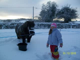 Our shetland in the Irish snow. 2010