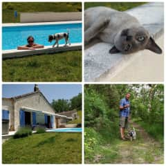 THS-New Zealand expats-France (Occitanie)-2 weeks June 2019-energetic Parsons Russell Terrier and two awesome Tonkinese cats
