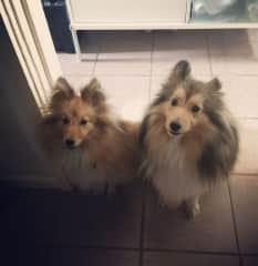 Alfie (left) and Ruby (right)