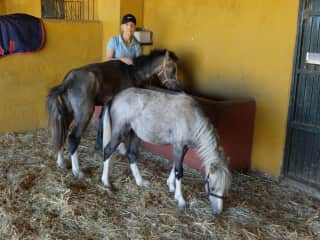 Hope and Valiente, rescued in 2012 by ARCH Malaga Spain, volunteering.
