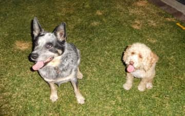 My Australian Pet Family