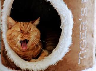 our cat Gabi