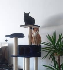 Louis (black), Uuno (Ginger)