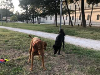 Gusti and Tassy out for morning walk
