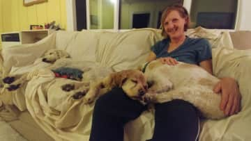 Caring for two sleepy cocker spaniels and my big dog