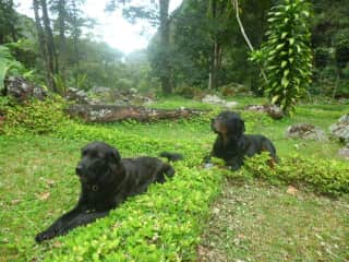 Our yunan ( 8 years, Rotweiler)and Lisa ( Labrador mix, rescue dog, about 6 years)