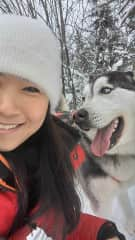 Not my husky but one of my dogs for the day from my dog sled team.