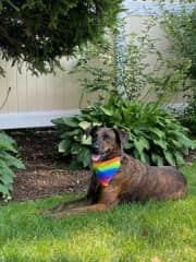 Mika celebrating Pride month.