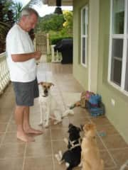 Puppy school with Lucky, Saint and Samson (we were pet sitting him).